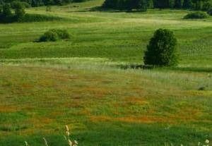 Agroturystyka Ostrów Kierwiński