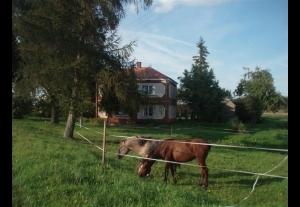 Agroturystyka EGLE 7 km od granicy z Litwą