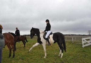 gospodarstwo agroturystyczne stadnina koni pasja popow