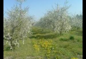 Gospodarstwo Agroturystyczne Bałtowski Dworek