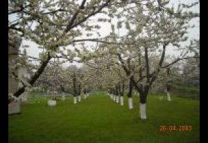 Agroturystyka - Pensjonat Krysia