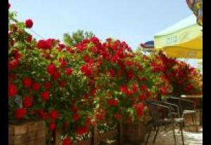 Bukacik-Restauracja I Noclegi