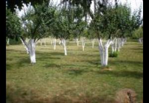 Agroturystyka U Elli